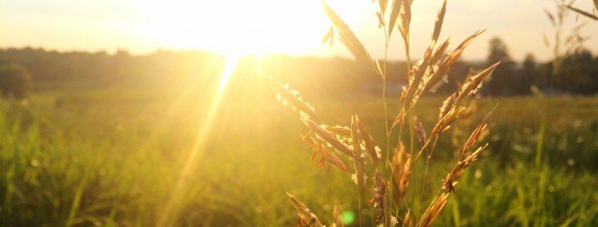 soleil lunette